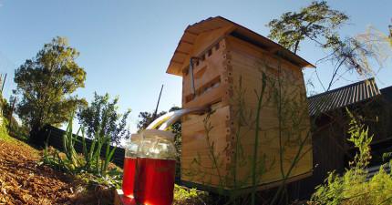 澳洲父子發明了這個革命性的全新採蜜神器,能夠完全不打擾蜜蜂完美取得蜂蜜!