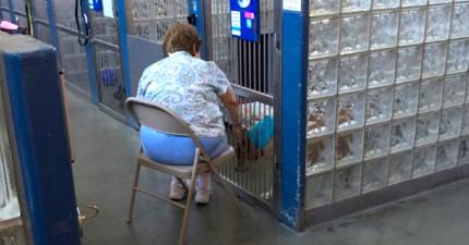很多人可能覺得這個阿姨跑到收容所裡說故事給可憐的動物聽已經瘋了,但這其實正在改變這些動物的生命啊!