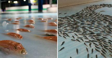 溜冰場下「埋5000隻海鮮」 溜到一半「冰塊大融化」民眾崩潰:是惡夢