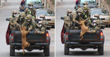 流浪狗「餓一整天」求軍人收編 「被拉上車後」開始訓練體能!