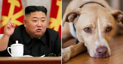 金正恩「禁止民眾養狗」怒斥是「奢侈品」:全部拿來當食材!