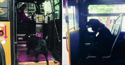主人動作太慢!聰明汪等不及「自己搭公車」 去公園散步再回家