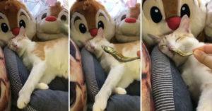 影/超愛睡!主人挑戰用美食「測試貪睡貓」 貓星人能抵過誘惑嗎?