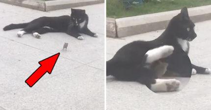 影/老鼠被追趕「奔向貓咪懷裡」求救 上演《湯姆貓傑利鼠》讓網融化