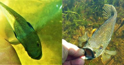 人類跟魚成為好友!5年來魚魚「每天碼頭等她」 開心跳水面:等妳好久了~
