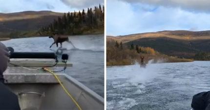 影/掌控查克拉的麋鹿?大展「輕功水上漂」過河不用橋