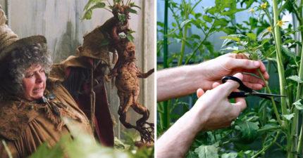 植物其實會講話?研究發現「被折斷會尖叫」5公尺都收到