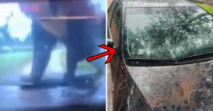 一家3口去動物園旅遊 竟遭「黑熊」狂砸車玻璃直接撞破!