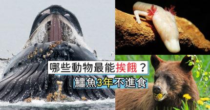動物「挨餓能力」排名出爐!冠軍「30年不吃不喝」連飯錢都省下