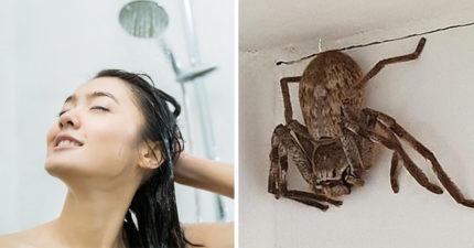 差點掉頭上!淋浴時「瞄到黑影」她崩潰求救 網看嚇壞:跟籃球一樣大