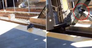 影/鴿子謀殺同伴!一把「狠推下月台」火車輾過 300萬人看傻