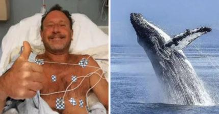 他被座頭鯨吃掉竟「沒事」!分享「40秒魚內求生」驚悚全程